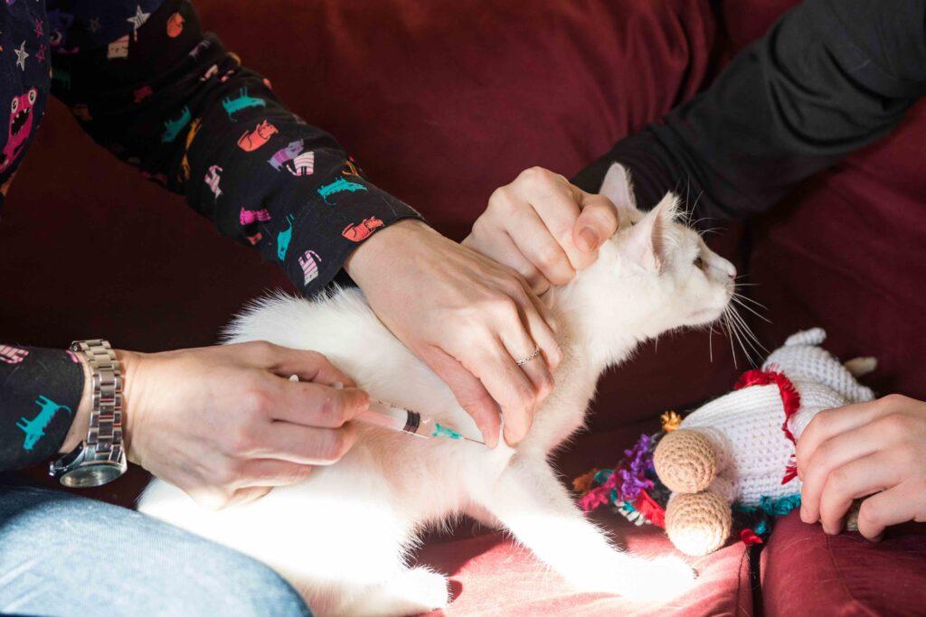 Medicina Preventiva Vacunal En El Felino: Importancia de las Enfermedades Retrovirales.